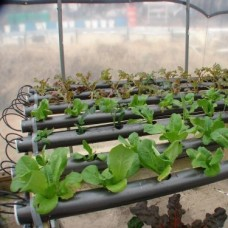 Grow Your Own Lettuce! Plans And DVD