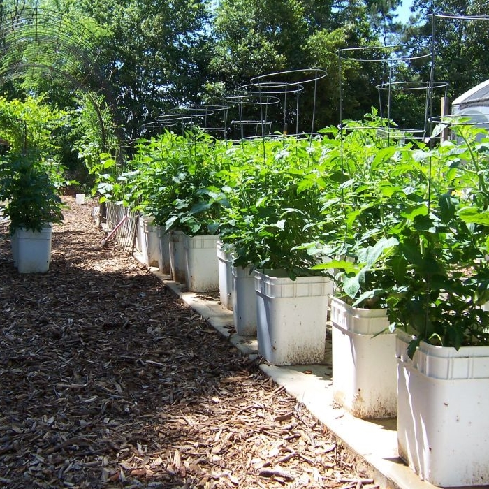Self-Watering Container Garden Plans And DVD
